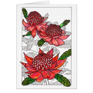 Cartes Conception florale de Waratahs d'Australien