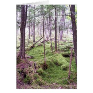 Cartes Condoléance de forêt