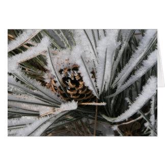 Cartes Cône de pin d'hiver