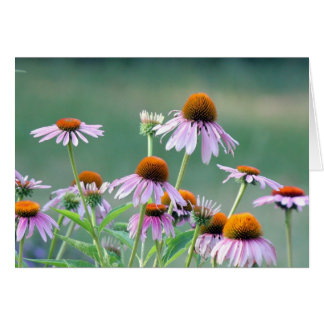 Cartes Coneflowers pourpres !