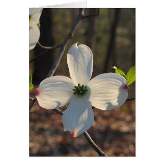 Cartes Cornouiller fleurissant - Customized2