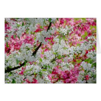 Cartes Couleurs de fleur de ressort