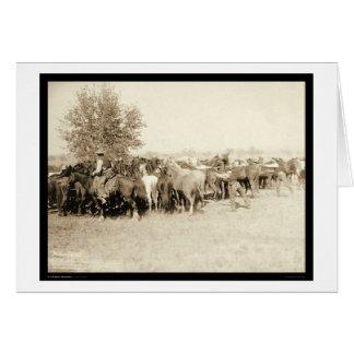 Cartes Cowboys Roping un troupeau de l'écart-type 1887 de