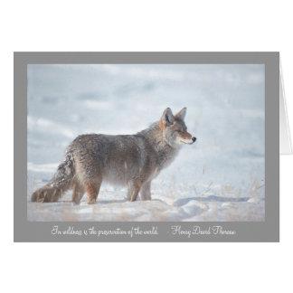 Cartes Coyote dans la neige