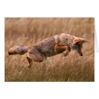 Cartes Coyote sautant - prés de gibbon