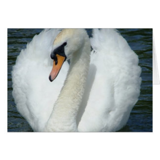 Cartes Cygne paisible