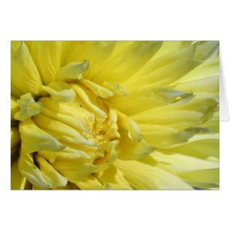 Cartes Dahlia lumineux et jaune citron