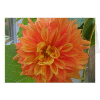Cartes Dahlia orange