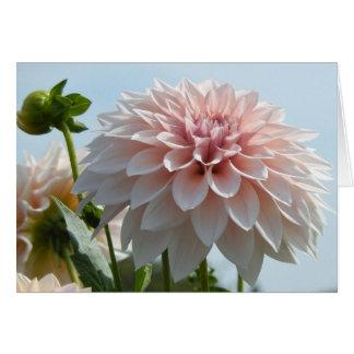 Cartes Dahlia rose