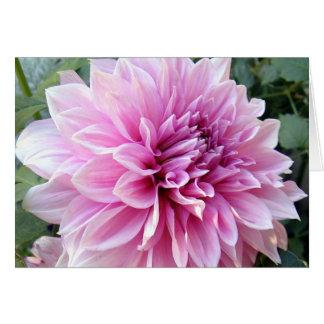 Cartes Dahlia rose et blanc