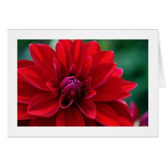 Cartes Dahlia rouge