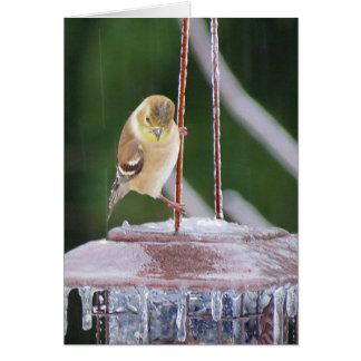 Cartes Danseur sur glace - oiseau femelle de chardonneret