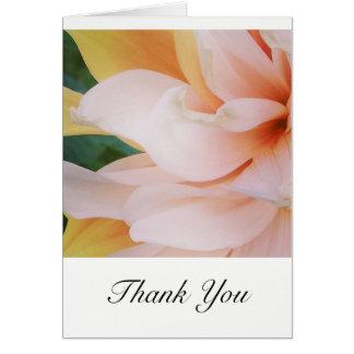 Cartes de Merci