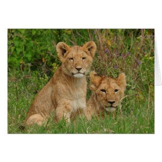 Cartes de note de CUB de lion