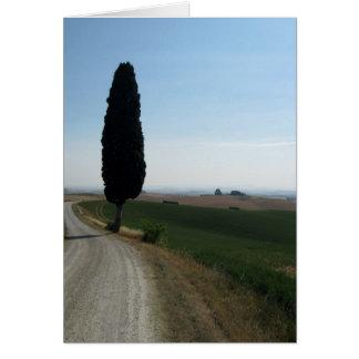 Cartes de note de Cypress italien