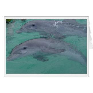 Cartes de note de dauphin