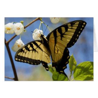 Cartes de note de papillon de machaon