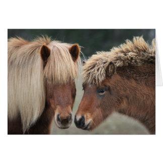 Cartes de note islandaises de cheval