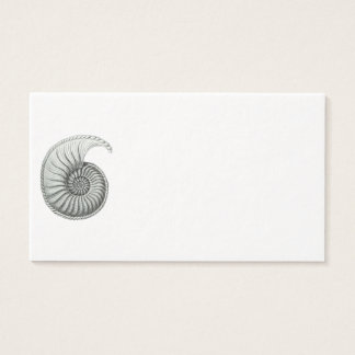 Cartes De Visite Ammonite