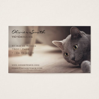 Cartes De Visite Animal de compagnie, beau chat.
