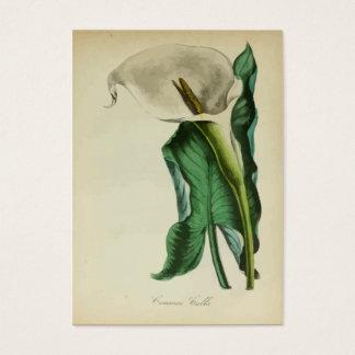 Cartes De Visite Aquarelle botanique vintage de la fleur | de