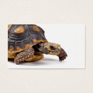 Cartes De Visite Cadeaux de tortue de Redfoot