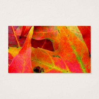 Cartes De Visite Feuille d'automne coloré en gros plan