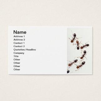 Cartes De Visite fourmis