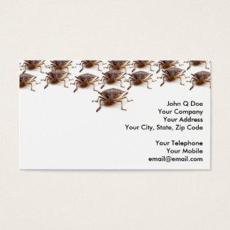 Cartes De Visite Insecte de puanteur ou de bouclier pour