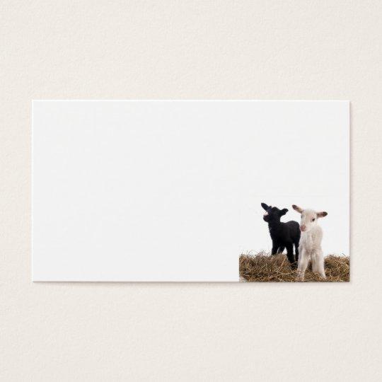 Cartes De Visite lamb