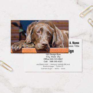 Cartes De Visite Photographie de labrador retriever de chocolat