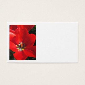 Cartes De Visite Tulipes rouges