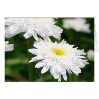 Cartes de voeux blanches de chrysanthèmes