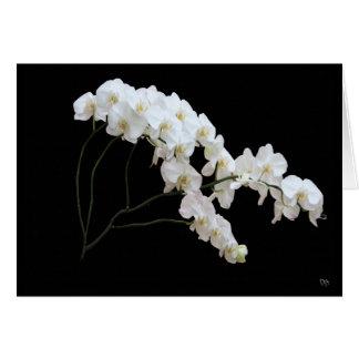 Cartes de voeux blanches d'orchidée