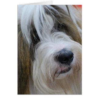 Cartes de voeux de Terrier tibétain