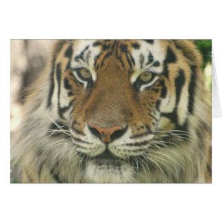 Cartes de voeux de tigre de Sumatran