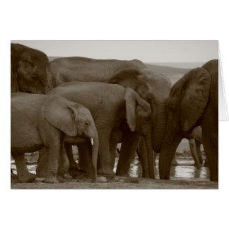 Cartes de voeux d'éléphant pour une cause