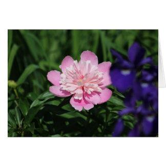 Cartes de voeux roses de Poenies