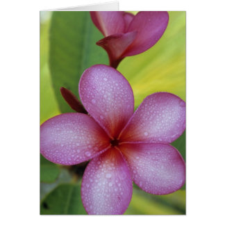 Cartes Des espèces fleurissez, de Plumeria), South