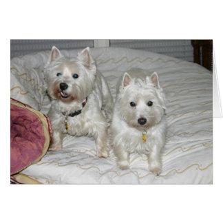 Cartes Desi et Lucy