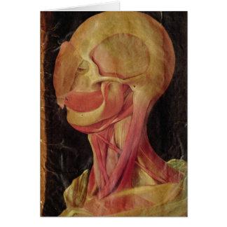 Cartes Dessin anatomique de la tête humaine