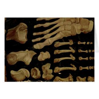 Cartes Dessin anatomique des os du pied