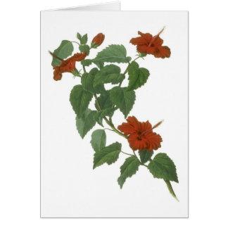 Cartes Dessin botanique de fleur de ketmie