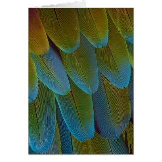 Cartes Détail de motif de plume de perroquet d'ara