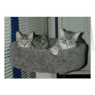Cartes Deux chats dans le logement de minou