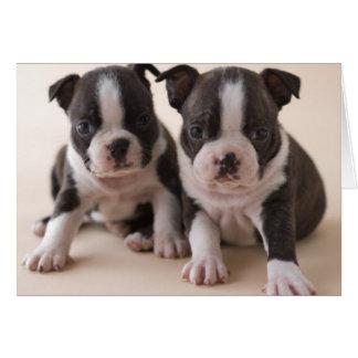 Cartes Deux chiots de Boston Terrier