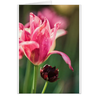 Cartes Deux fleurs de tulipe