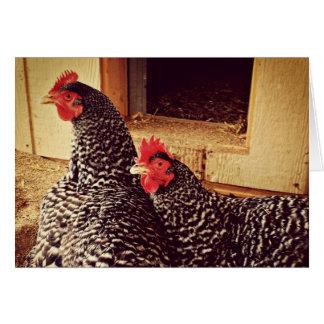 Cartes Deux poulets caressant
