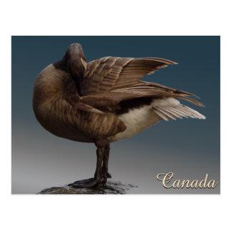 Cartes d'oies du Canada de cartes postales de