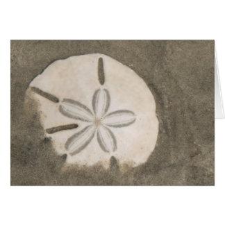 Cartes Dollar de sable (Echinarachnius Parme)